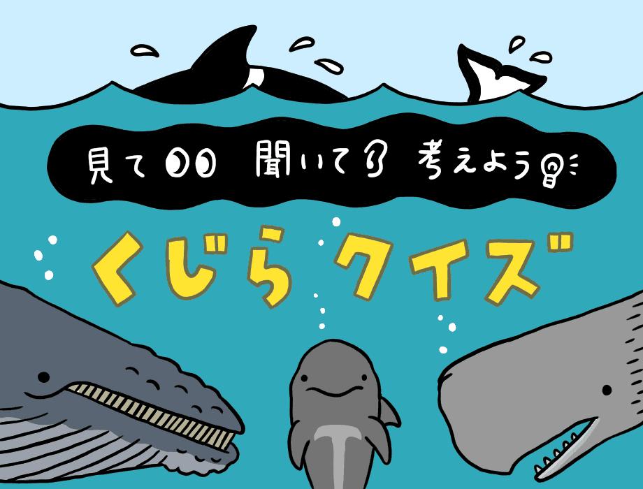 見て 聞いて 考えよう クジラクイズ