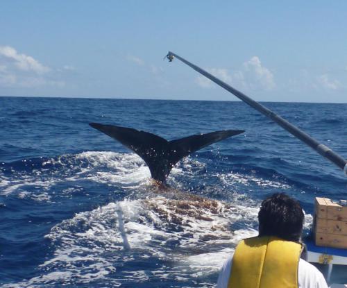 マッコウクジラ(青木かがり)